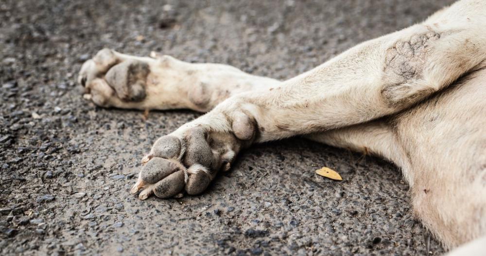 https://www.portalodia.com/noticias/teresina/projeto-de-lei-preve-multa-de-10-mil-para-quem-atropelar-animais-e-nao-prestar-socorro-386666.html#:~:text=(Foto%3A%20Shutterstock)